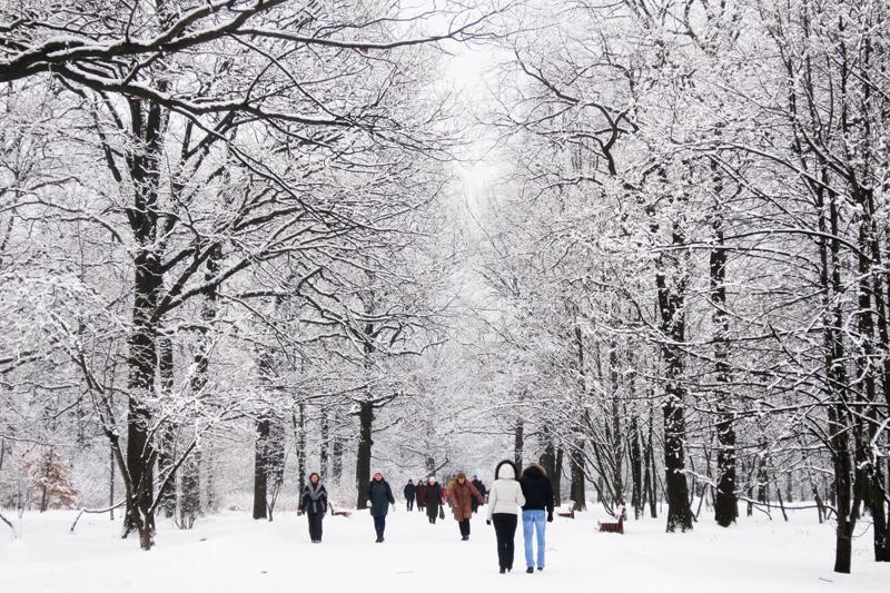 Ботанический сад зимой cozy moscow