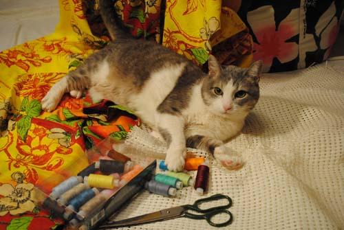 кошка Стася