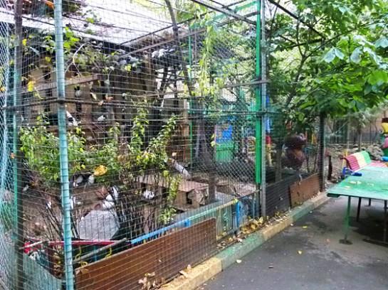 фазаны и павлины на ул. Макаренко