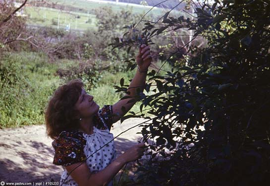 село Крылатское, 1981 год