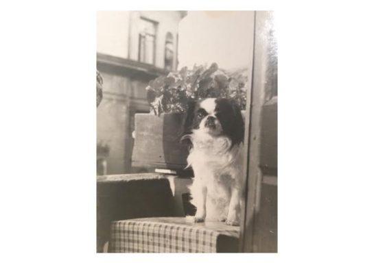 собачка Нора на окне