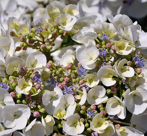 """Вчера в парке """"Кузьминки-Люблино"""" открылся фестиваль цветников"""