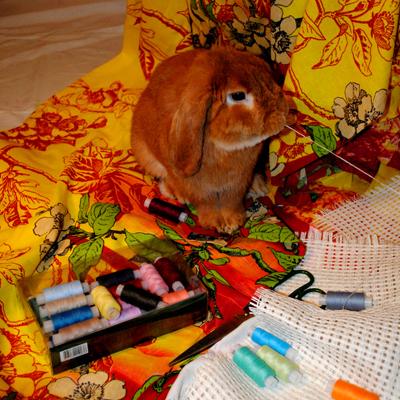 Кролик Веша