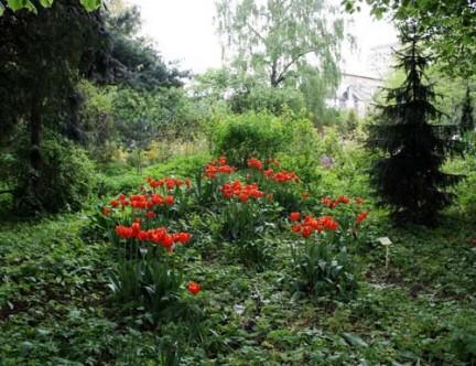 аптекарский огород