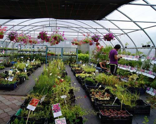 лаборатория овощеводства