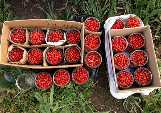 ягоды для меда-крема