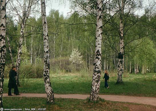 Бирюлёвский дендропарк